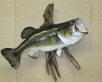 Largemouth Bass, Right 003