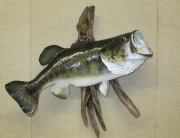 Largemouth Bass, Right 003