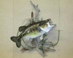 Large Mouth Bass, Right Turn Habitat