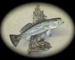 Sea Trout 1