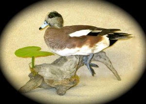 Widgeon 2