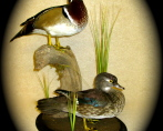 Wood Duck Pair 001