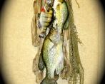Stringer of Fish 001